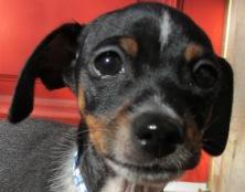 Concerned Puppy